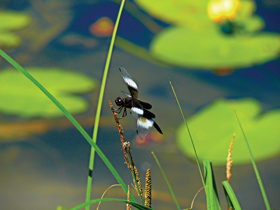 Dragonfly on Perch Lake by Craig Goodrich